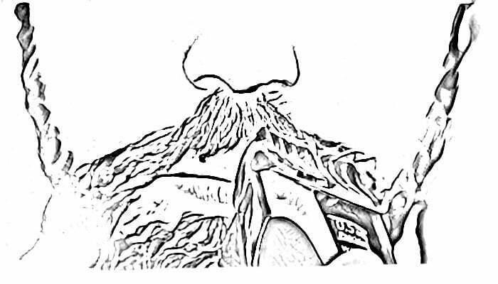 Rasez la Moustache
